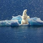 Yes, the climate commies are lying about the polar bears, too